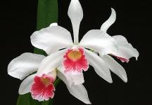 Colombia con la mayor variedad de orquídeas del mundo