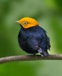 Avistamiento de aves_2