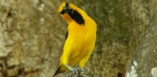 Avistamiento de aves_3
