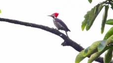 Avistamiento de aves_8